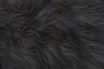 Black animal hair
