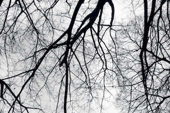 Black branches
