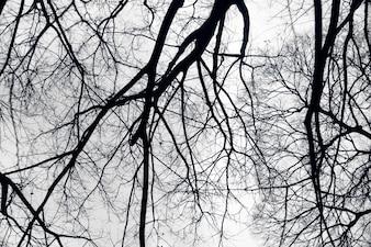 Black branches