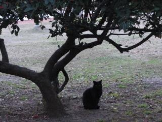 Black cat under a tree
