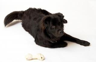 black dog  friend