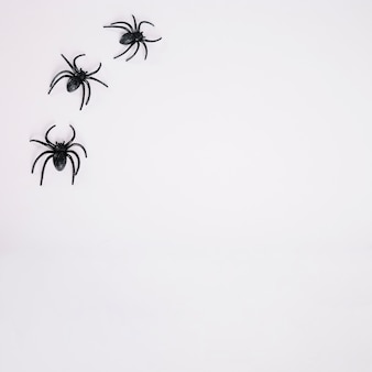 Black spiders on white background