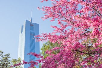 Blooming tree in the city