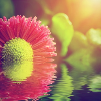 Blossoming flower in fresh water