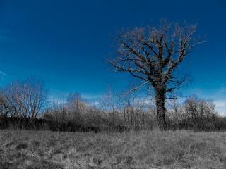 Blue tree, effects