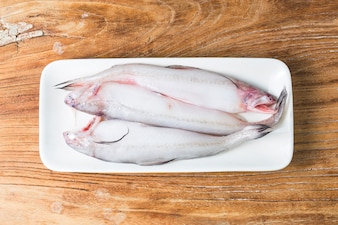 Bombay duck fish