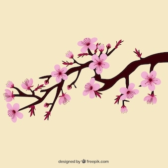 Branch with beautiful cherry blossoms