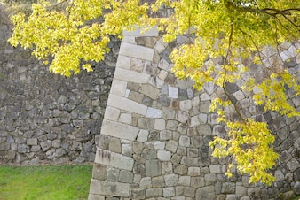 Branch with stone wall background