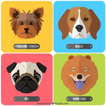Breeds of dogs collection
