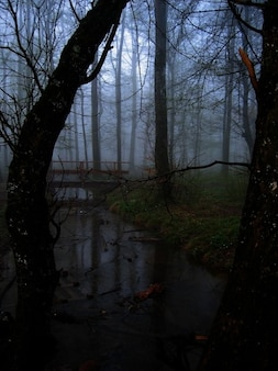Bridge glade fog tree forest bach atmosphere