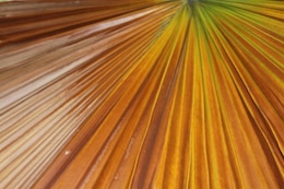 Brown Palm Leaf texture