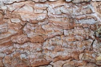 Brown Tree Bark Texture