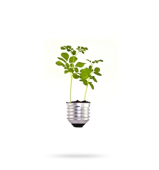 Bulb with a green plant