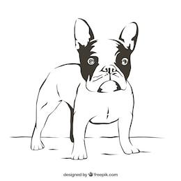 Bulldog outline