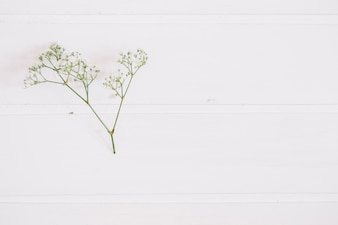 Bunch of baby's breath on a white surface