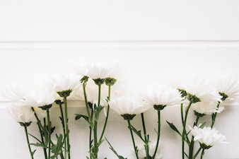 Bunch of white flowers in front of a white wooden background horizontal
