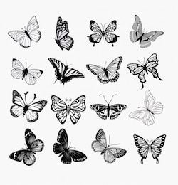 Butterflies silhouettes illustration set