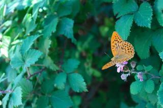 Butterfly, wings, orange