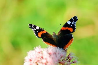 Butterfly about to fly