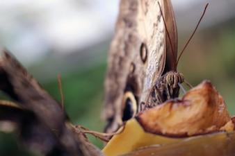 Butterfly in detail