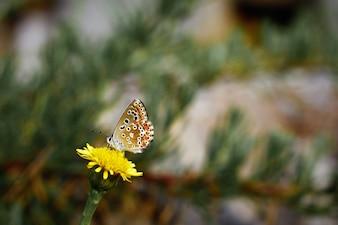 Butterfly on a daisy flower