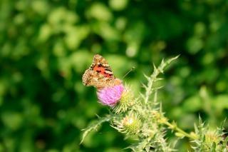 Butterfly, petals