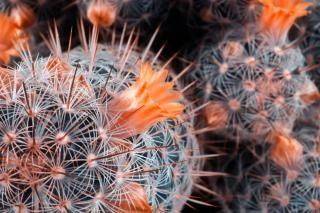 サボテンは植物のクローズアップ