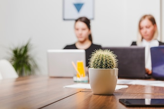 Cactus on office table