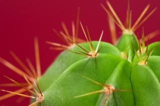 Cactus  plant  grow