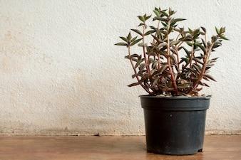 ビンテージの背景テクスチャのサボテン植物