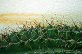 Cactus, spiny, sharp, sting