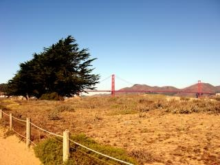 California, tree, park