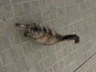 Cat, fur, animal