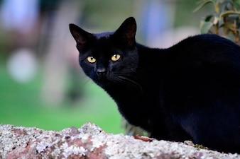 Cat animal beautiful black eyes