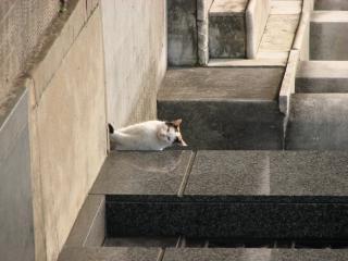 Cat, fur
