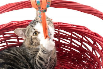 Cat in red basket