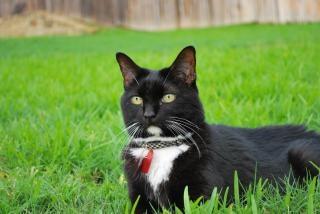 кошка, газон
