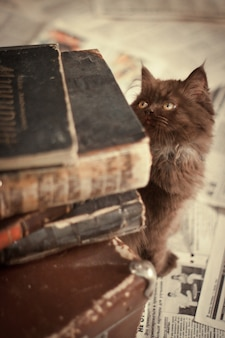 Cat looking at old books