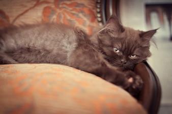 Cat lying on antique armchair