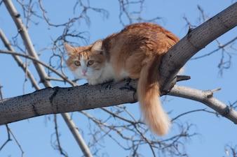 Cat on a tree