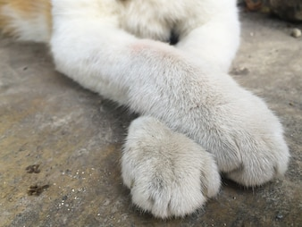 Cat paw in detail