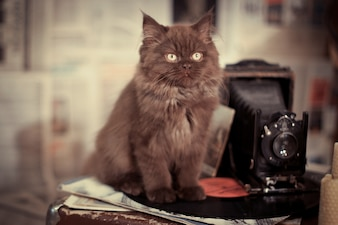 Cat sitting next to an antique camera