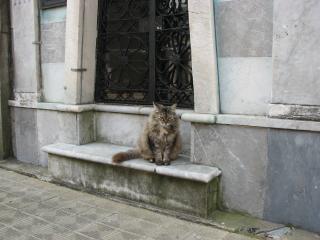 Cat, street, paw