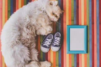 子供の靴フレームの猫