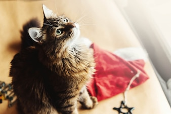 Cat with a santa hat next to him