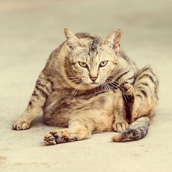 黒シルエット猫