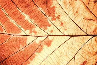 茶色の葉のテクスチャを閉じる