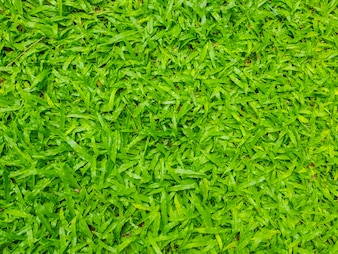 Close-up image of fresh spring green grass .