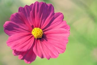 Close up macro flower