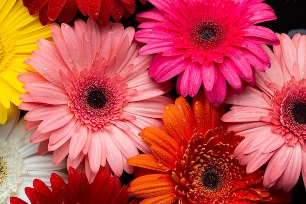 Close-up of multicoloured gerbera daisies